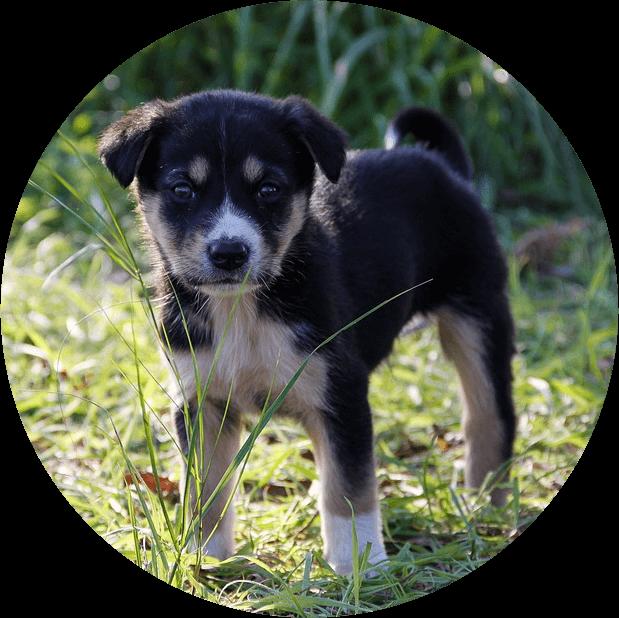 Puppy Class Thumbnail