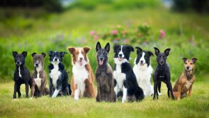 Group of dogs - background/.
